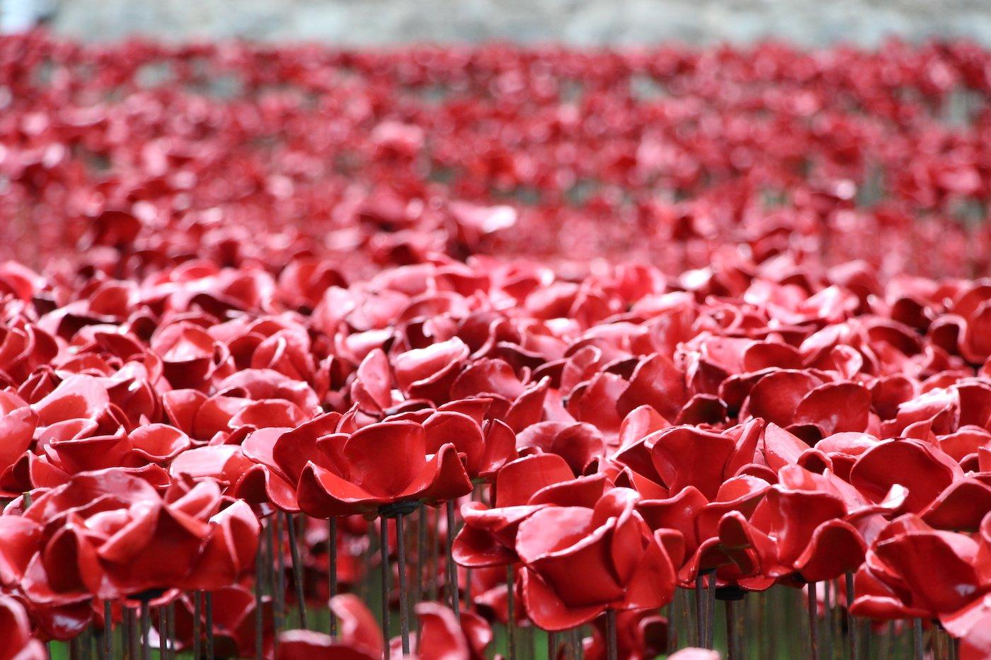 Johnson Tiles Tower Poppies Return To Stoke On Trent In