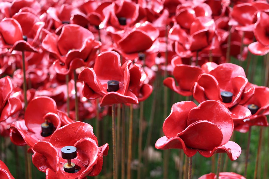 Tower poppies - a lasting tribute to our servicemen