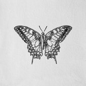 Engravings, Butterfly White
