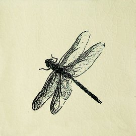 Engravings, Dragonfly Cream