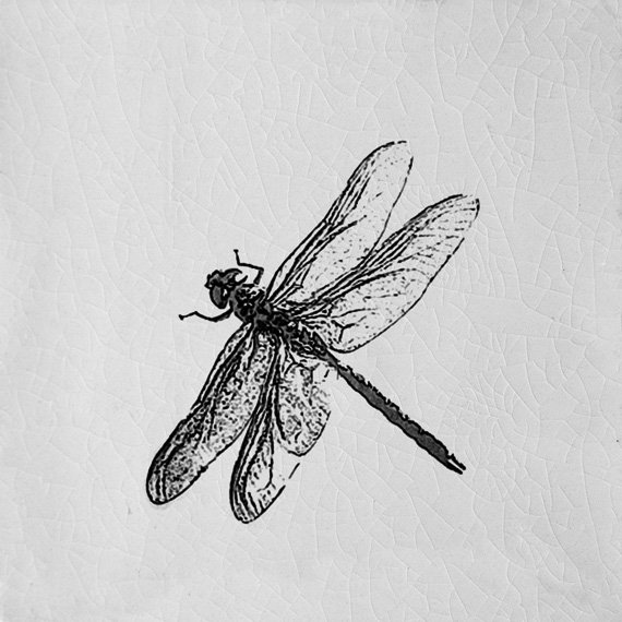 Engravings, Dragonfly White (100mm x 100mm)